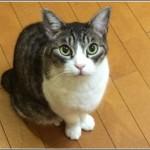 カラオケまねきねこ吉祥寺北口店の料金と予約について!